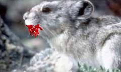 deadly-gerbil