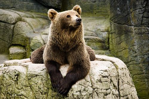 フリー画像| 動物写真| 哺乳類| 熊/クマ|        フリー素材|