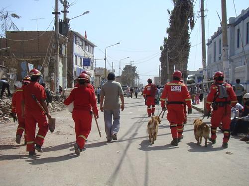 Imagenes y Fotos del Terremoto en Peru: Bomberos rescatistas y perros detectores