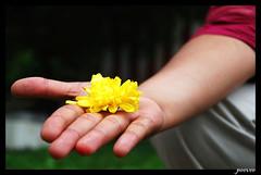 flower (peevee@ds) Tags: bangalore betta bws weekendshots perumal ramanagaram venkatesan ramagiri bangaloreweekendshots venkatesanperumal 26thaugust2007 26thaugust2007bws