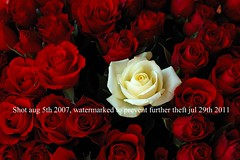 white rose (j_wijnands) Tags: red roses white flower rose d50 bunch bouquet 28105mmf3545d 28105 pleasecontactmeifyouwanttouseapicturejeroenwijnandsatgmailcom