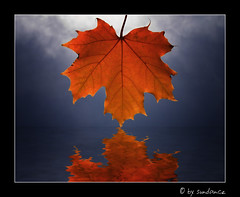 maple-tree-leaf (claudia hering (sundance)) Tags: blue autumn red cloud reflection water bravo searchthebest framed pentaxk110d anawesomeshot superaplus aplusphoto diamondclassphotographer thegoldenmermaid theperfectphotographer meapleleaf thegoldendreams