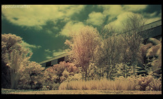 ~Infrared Testing (Paula Maffei) Tags: park parque nature garden landscape outside sopaulo filter infrared ibirapuera hoya r72 paulamaffei