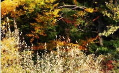 Autumn (blmiers2) Tags: autumn newyork fall nature photography nikon fallcolors autumncolors fallfoliage d40x gosnellbigwoodspreserve blm18 blmiers2