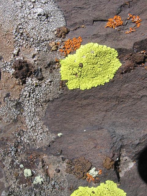 Lichens, DeGarmo Canyon