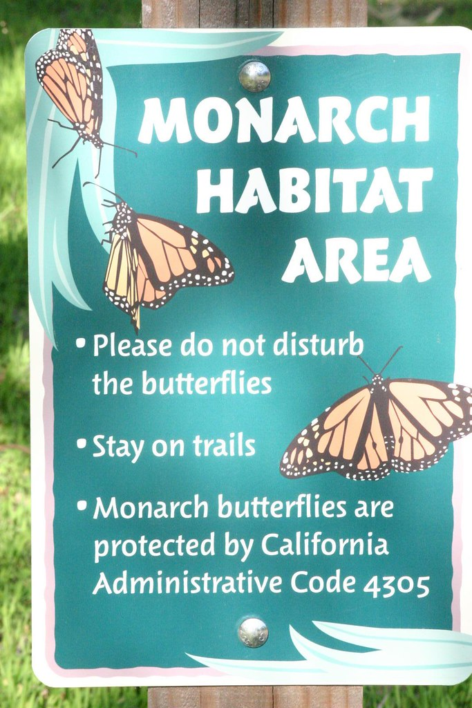 Monarch Habitat Area Santa Cruz Ca.