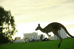 catch the sunset! (maybemaq) Tags: park city sunset urban animal bike bicycle island jump twilight dusk wildlife assignment 9 australia kangaroo perth wa sus heirissonisland