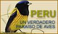 PERU PAIS DE AVES