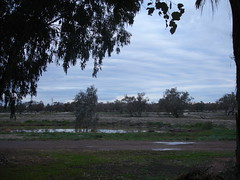 Bourke Camping ground1