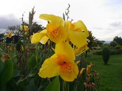 Flores 05 Nilceia Gazzola (nilgazzola) Tags: brasil de foto sp fotos ou com nil minhas tirada maquina echapora gazzola nilgazzola
