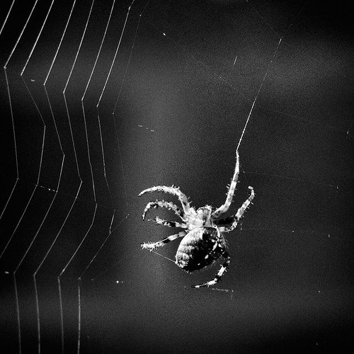 spinning the web