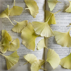 (.cascata.) Tags: autumn leaves yellow book ginkgo colours onmy favourite scattered layered 90365 szilvsilajos egymsszemben