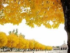 aranjuez en amarillo (yolanda h. mangas) Tags: en naturaleza arboles amarillo otoo aranjuez mywinners platinumphoto