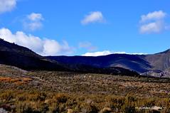 October 30, 2010 (xLimited.Editionx) Tags: horses horse mountains trucks wildhorses bigtrucks coldcreek coldcreeknevada