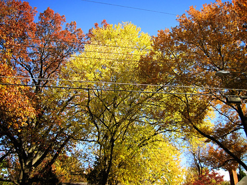 leaves with telephone wires