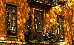 belle journe (horlo) Tags: city flowers windows wallpaper urban plants sun france detail building architecture facade reflections french geotagged soleil town nice frankreich europa europe quiet shadows lyon balcony peaceful rhne francia reflets ville urbain vieuxlyon rhnealpes fonddcran
