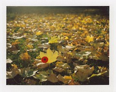 .. (Js) Tags: camera november green fall grass polaroid fuji bokeh automatic poppy land remembranceday leafs 250 lestweforget fp100c