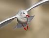 Flight (Andrew Haynes Wildlife Images) Tags: bird nature wildlife gull coventry warwickshire gitzo wimberley blackheadedgull coombeabbey canon7d ajh2008