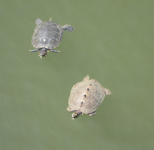 Slider and map turtle