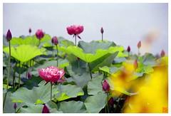Lotus 070710 #03