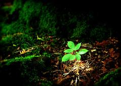 Rebirth (James Jordan) Tags: life new hope birth continuity rebirth reborn
