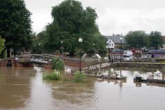 Flooded gardens