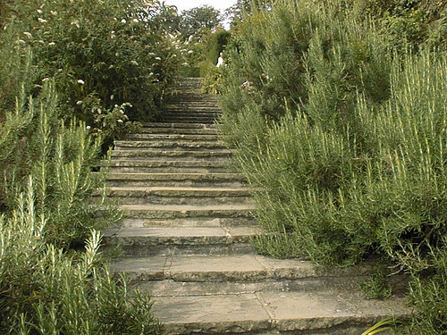 Rosemary Bushes Lining Walkway at Chartwell UK.   Winston Churchill's Residence.