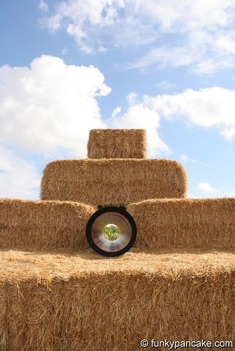 needle in a hay stack
