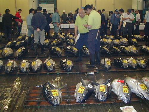 Tuna Auction at Tsukiji Fish Market. Tokyo, Japan (築地市場, 東京 日本)