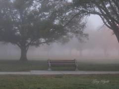 Fog In The Park (TheCount88) Tags: trees fog florida foggy parks whatawonderfulworld flickrsbest mywinners platinumphoto exemplaryshots naturewatcher naturewatcheraward astoundingimageaward bestnaturetnc07 beautifulmothernatureaward amazingphotoaward