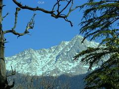 Dharamshala - Snow peaks