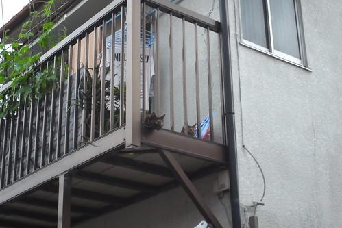 Today's Cat@2010-06-21