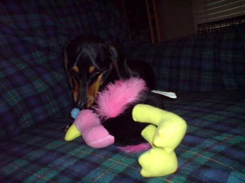 Holli playing with Saffy's new toy