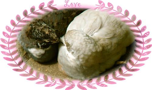 Love Doves For Kiki