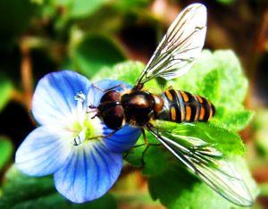 abelha 3
