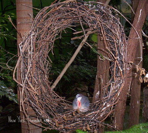 Bird in Circle Nest