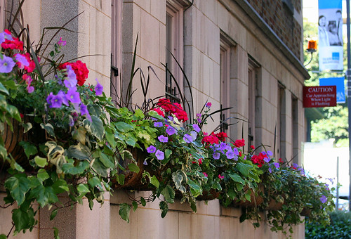 German Window Boxes Window Boxes at Street Level