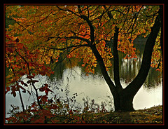 Tree on Fire (Gayle Nicholson) Tags: autumn trees fall leaves silhouette fire autumnleaves arkansas treeonfire mywinners naturewatcher gaylenicholson autumnsilhouette autumntreeonpond