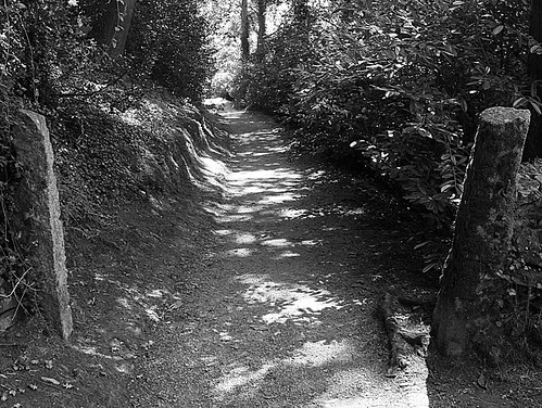 Sun Dappled Path Monochrome II