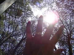 touching the sun (THE SHOW MUST GO ON) Tags: trees sun nature colors alberi myself hand natura ring heat mano sole colori riflessi calore reflexes anello handsintheair tattografia