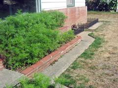 garden now.jpg