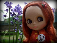 The bluebell discovery...2 of 3
