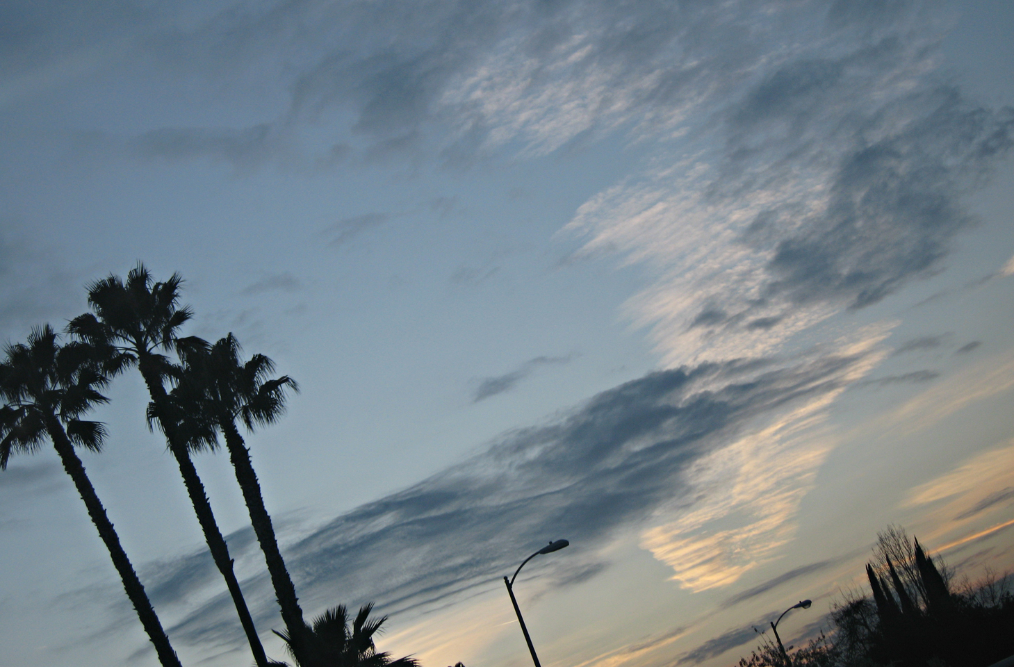 cloudy sky+palm trees+street lights
