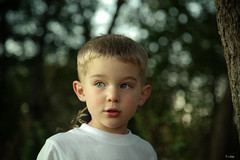 Into the Woods (Rebecca812) Tags: family trees boy portrait cute beautiful children outside kid woods child play bokeh blueeyes fear handsome son bark 3years sunsetlight apprehension blondhair canon5dmarkii familygetty2010 rebecca812