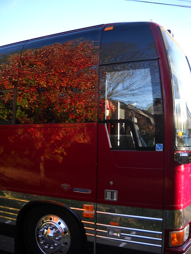 Fall Leaves reflected on the bus