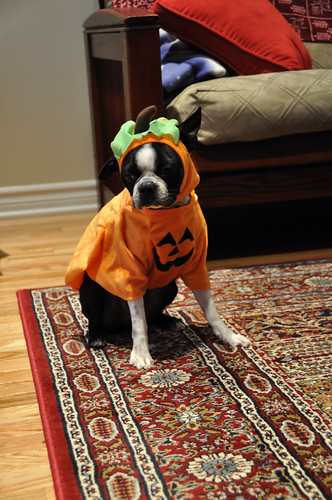 Leroy in costume