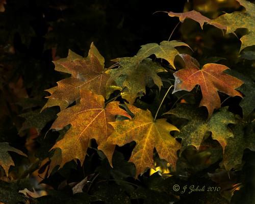 Autumn in Fahrens Park