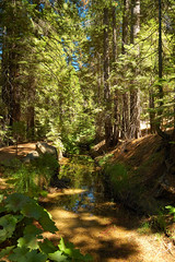 Yosemite_Shady Stream (Chocolate Super Nova) Tags: california trees light water beautiful contrast forest nationalpark nikon stream pretty shadows nikond70 path details scenic peaceful textures dirt trail pines yosemite