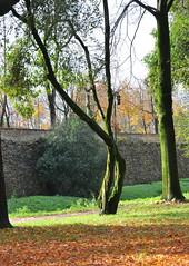 luci  colori in un controluce autunnale (aldofurlanetto) Tags: mura autunno treviso