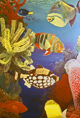 Painting: Coral Reef and Fish (Floyd Muad'Dib) Tags: ocean sea usa fish art animal animals coral america painting geotagged paint acrylic united north paintings sealife clownfish tropical states oceans reef sponge angelfish acrylics corals triggerfish sponges acrylicpaint seas coralreef wrasse seafan acrylicpaints tropicalpainting seafans tropicalpaintings coralreefart coralreefpainting coralreefpaintings reefpainting